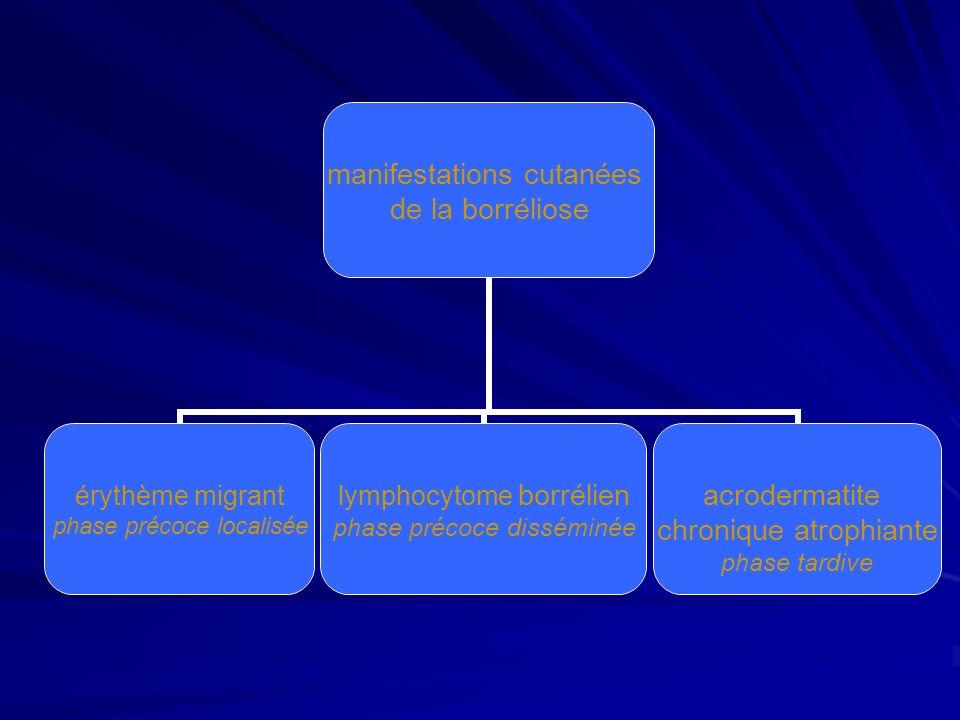lérythème migrant érythème de Afzelius-Lipschütz en moyenne 7 à 30 jours après la piqûre autour du point de morsure anneau dextension progressive non douloureux, non prurigineux sensation de chaleur locale peut passer inaperçu (50% des cas) signes généraux peu fréquents céphalées, fièvre, arthralgies myalgies, fatigue