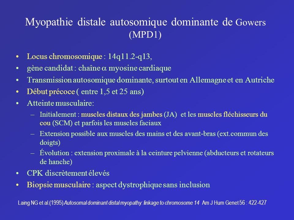 Myopathie distale autosomique dominante de Gowers (MPD1) Locus chromosomique : 14q11.2-q13, gène candidat : chaîne myosine cardiaque Transmission auto
