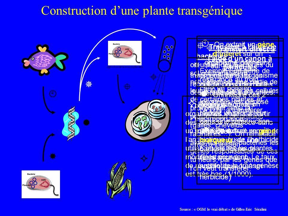 Régénération des organismes entiers à partir des cellules modifiées dans un milieu de culture rempli de lantibiotique ou de lherbicide utilisé où seules les plantes modifiées poussent.