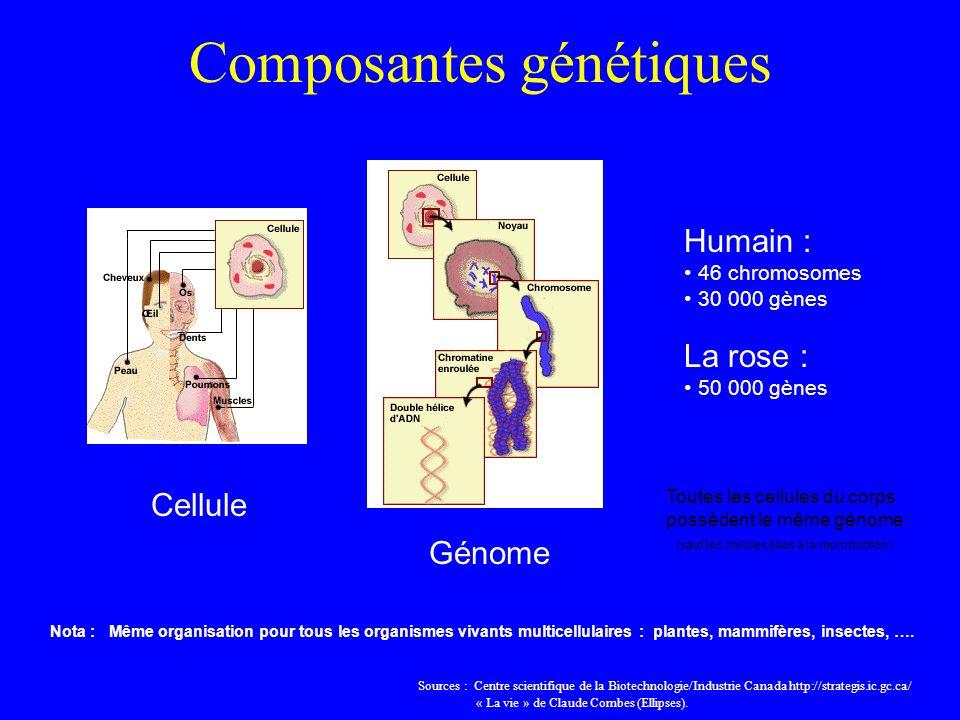 Composantes génétiques Cellule Génome Nota : Même organisation pour tous les organismes vivants multicellulaires : plantes, mammifères, insectes, ….