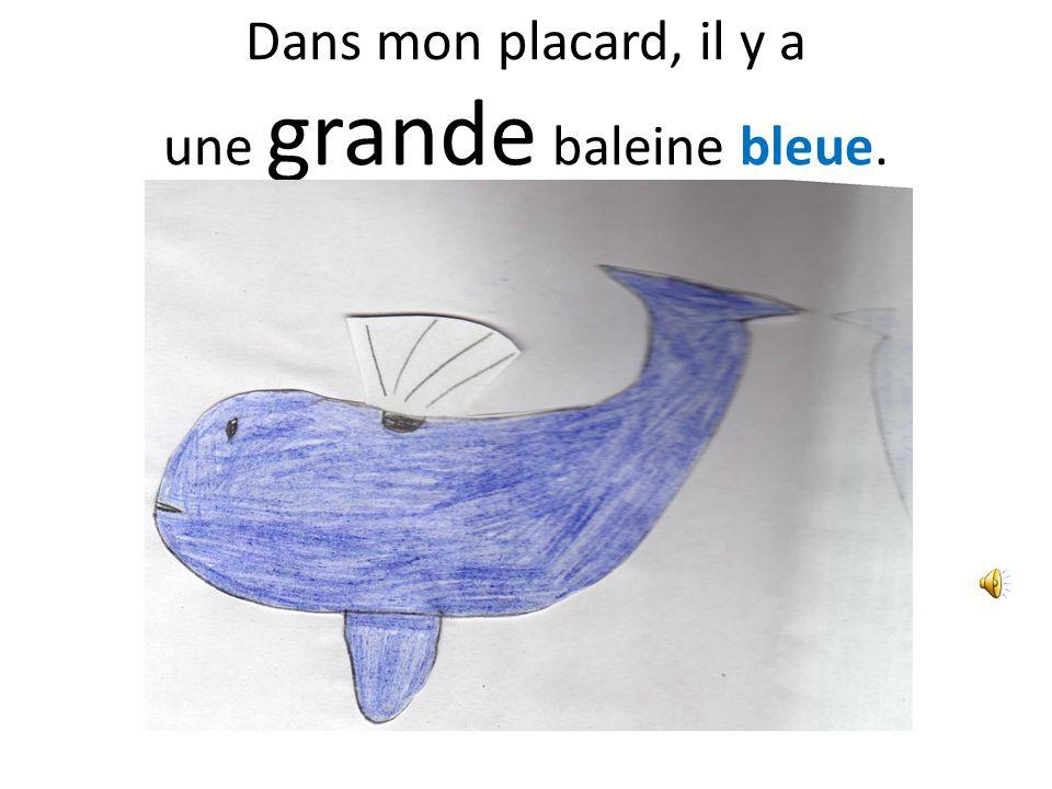 Dans mon placard, il y a une grande baleine bleue.