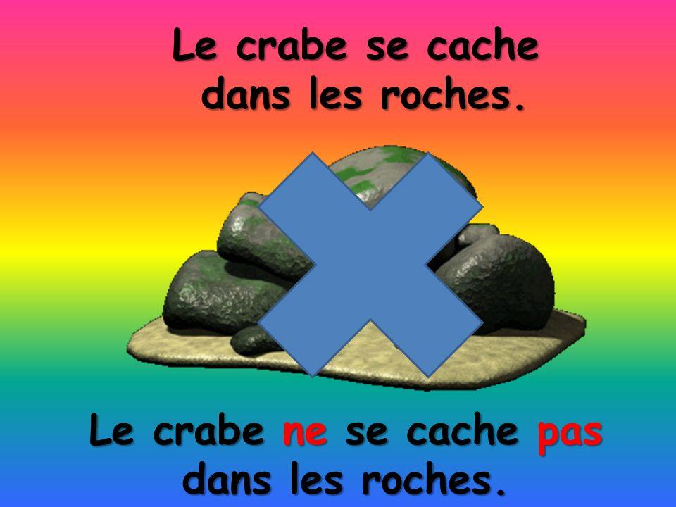 Le crabe ne se cache pas dans les roches. Le crabe se cache dans les roches.