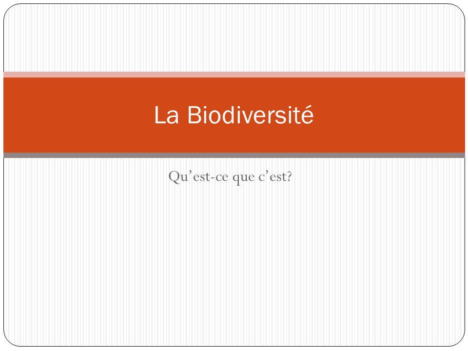 Quest-ce que cest? La Biodiversité