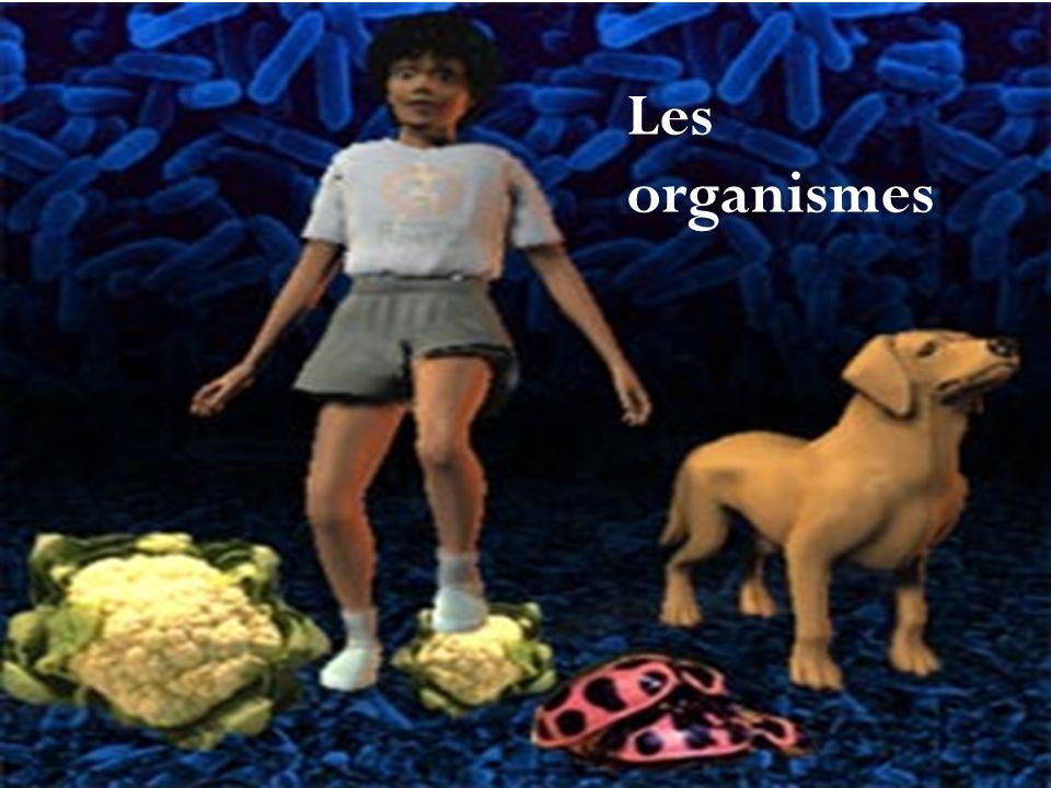 Les organismes