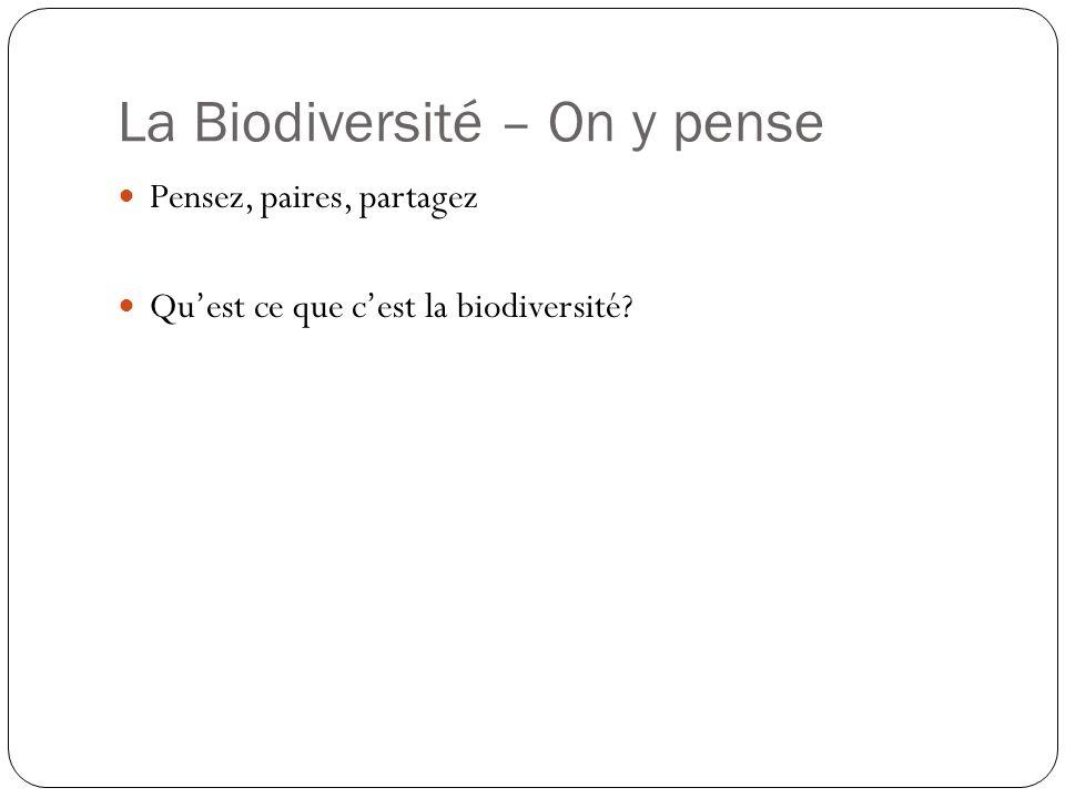 La Biodiversité - Activité En groupes, crée un schéma de tout vous pensiez est lié à la biodiversité Pense bien à des catégories et quest-ce quil y a dans chaque catégorie Utilise les mots et les symboles Vous allez présenter vos idées à la classe