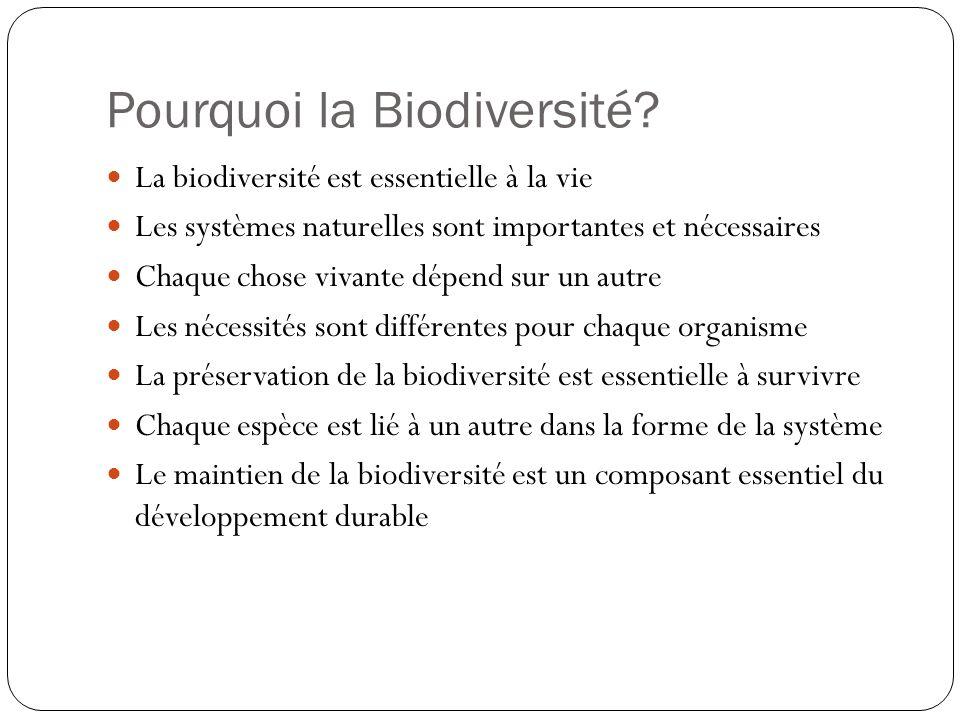 Pourquoi la Biodiversité? La biodiversité est essentielle à la vie Les systèmes naturelles sont importantes et nécessaires Chaque chose vivante dépend
