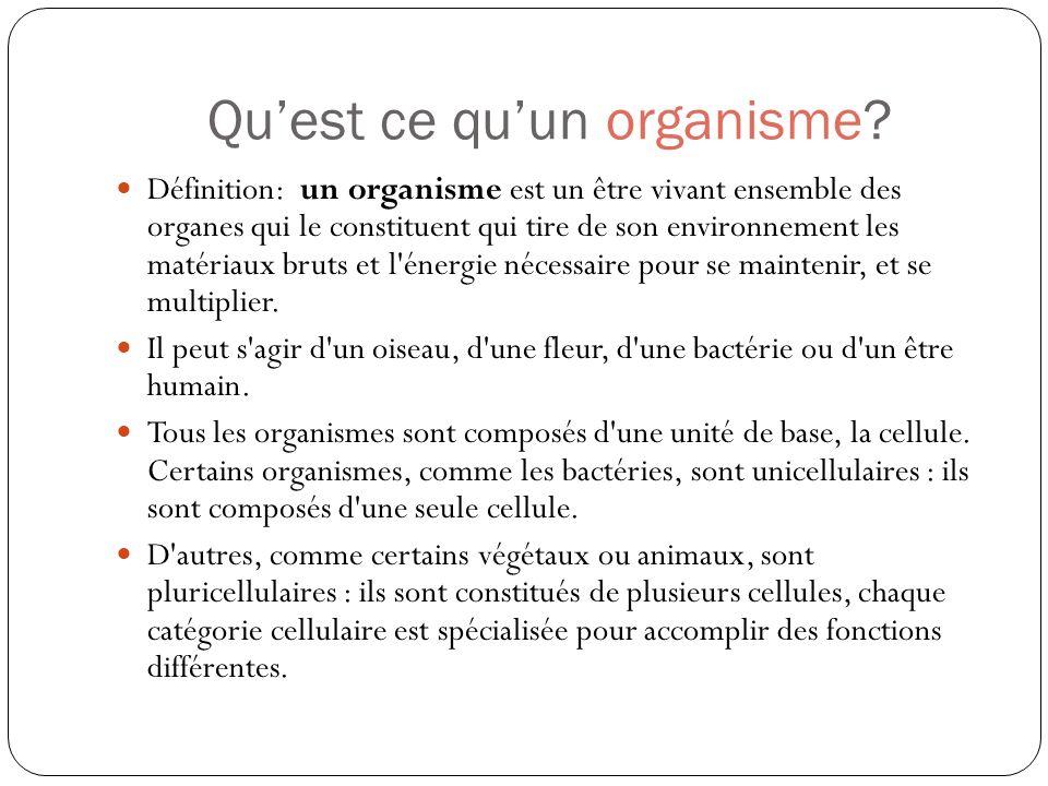 Quest ce quun organisme? Définition: un organisme est un être vivant ensemble des organes qui le constituent qui tire de son environnement les matéria
