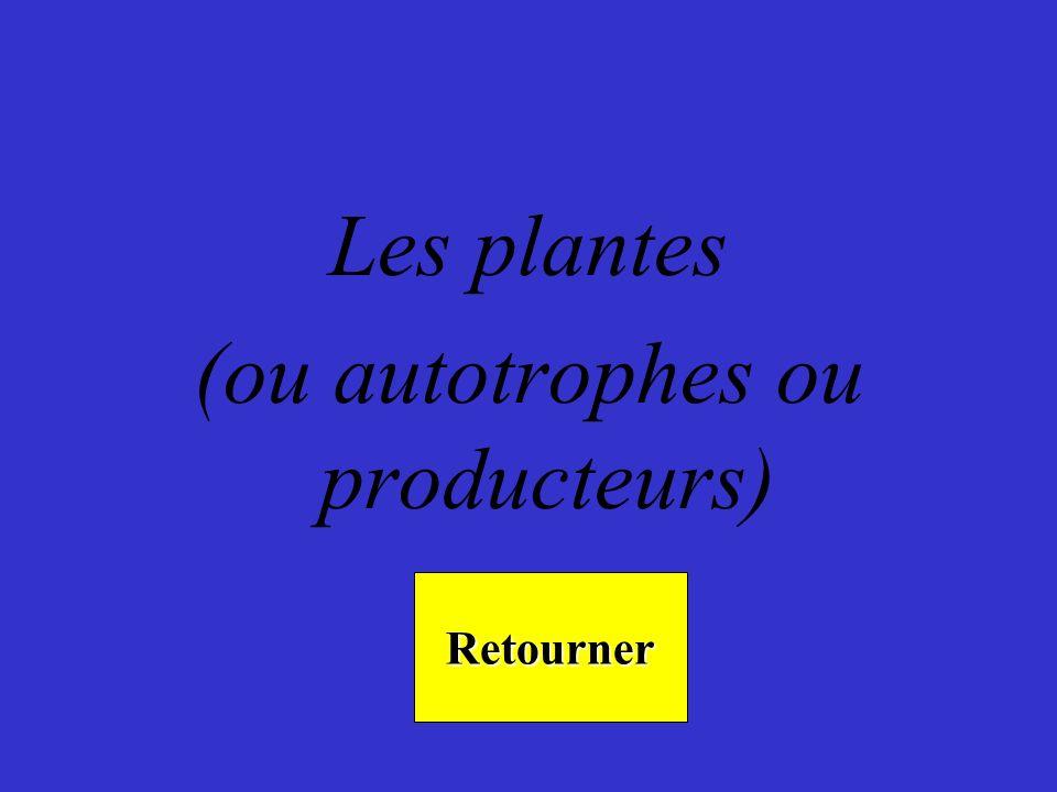 Les plantes (ou autotrophes ou producteurs) Retourner