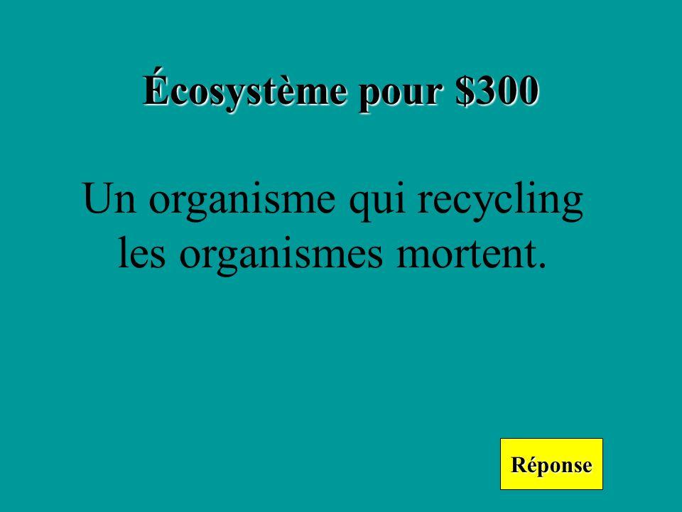 Écosystème pour $300 Réponse Un organisme qui recycling les organismes mortent.