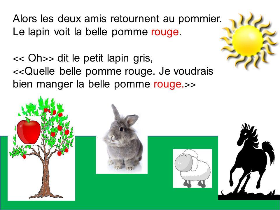 Alors les deux amis retournent au pommier. Le lapin voit la belle pomme rouge. ˂˂ Oh ˃˃ dit le petit lapin gris, ˂˂ Quelle belle pomme rouge. Je voudr