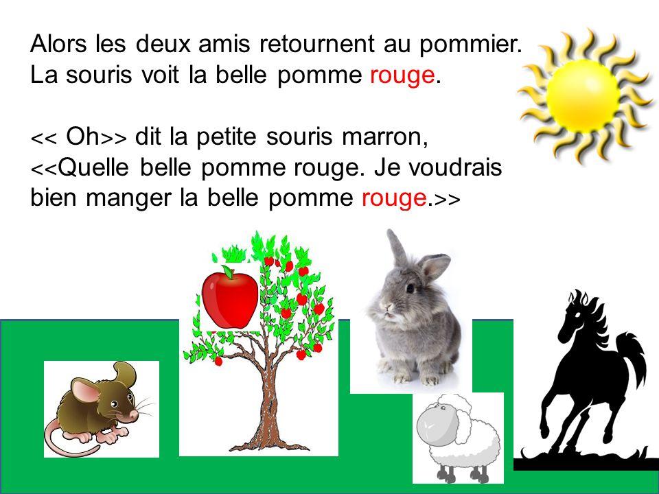 Alors les deux amis retournent au pommier. La souris voit la belle pomme rouge. ˂˂ Oh ˃˃ dit la petite souris marron, ˂˂ Quelle belle pomme rouge. Je