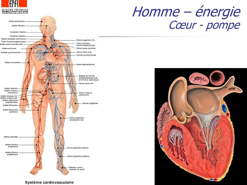 ECOLE POLYTECHNIQUE FEDERALE DE LAUSANNE Homme – énergie Cœur - pompe