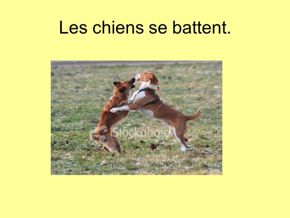 Les chiens se battent.