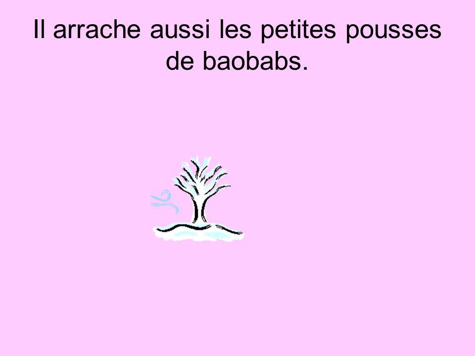 Il arrache aussi les petites pousses de baobabs.