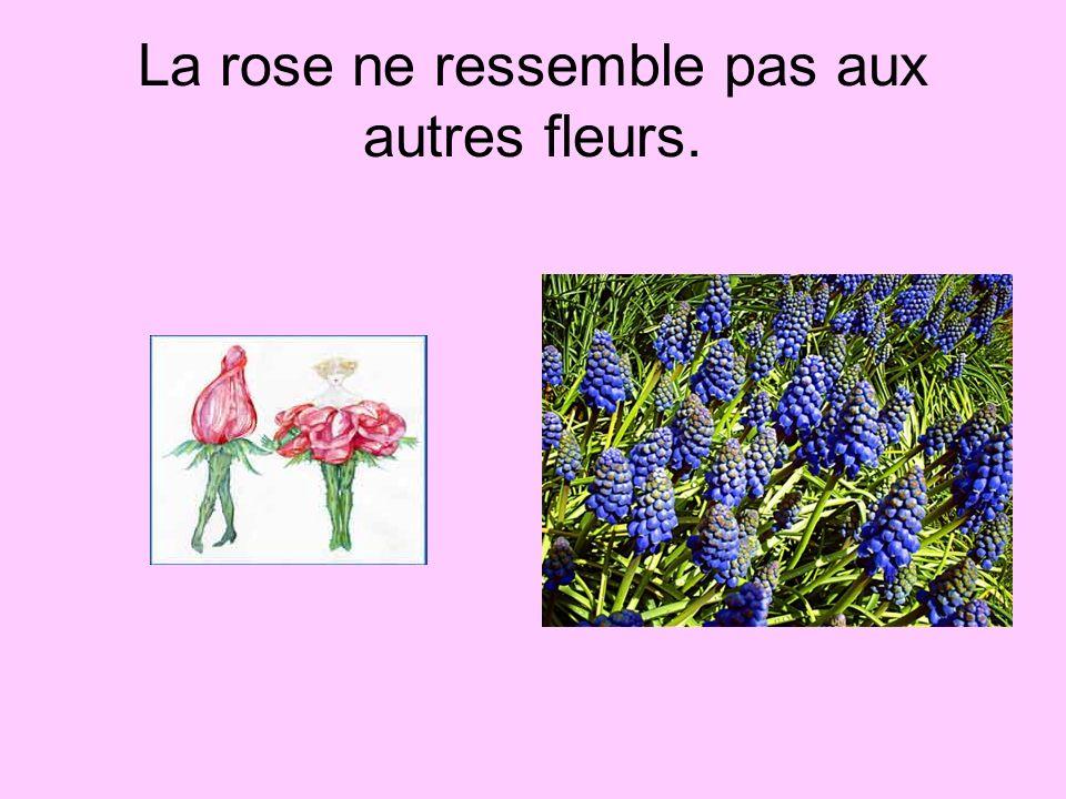 La rose ne ressemble pas aux autres fleurs.