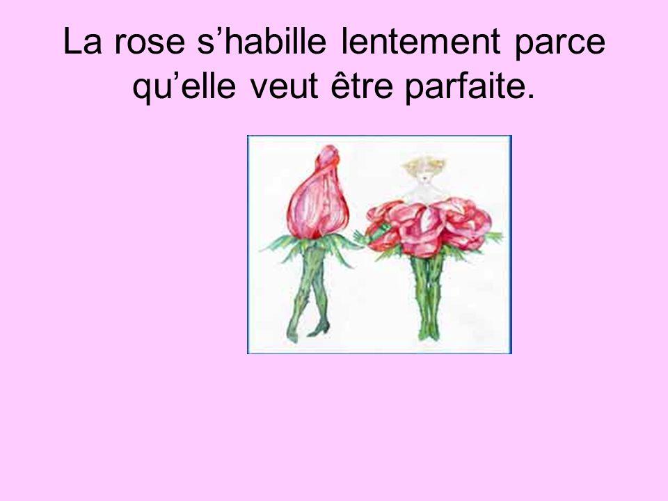 La rose shabille lentement parce quelle veut être parfaite.