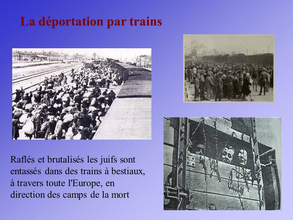 La déportation par trains Raflés et brutalisés les juifs sont entassés dans des trains à bestiaux, à travers toute l'Europe, en direction des camps de