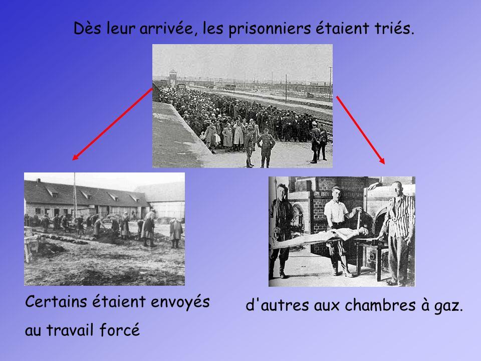 Dès leur arrivée, les prisonniers étaient triés. Certains étaient envoyés au travail forcé d'autres aux chambres à gaz.