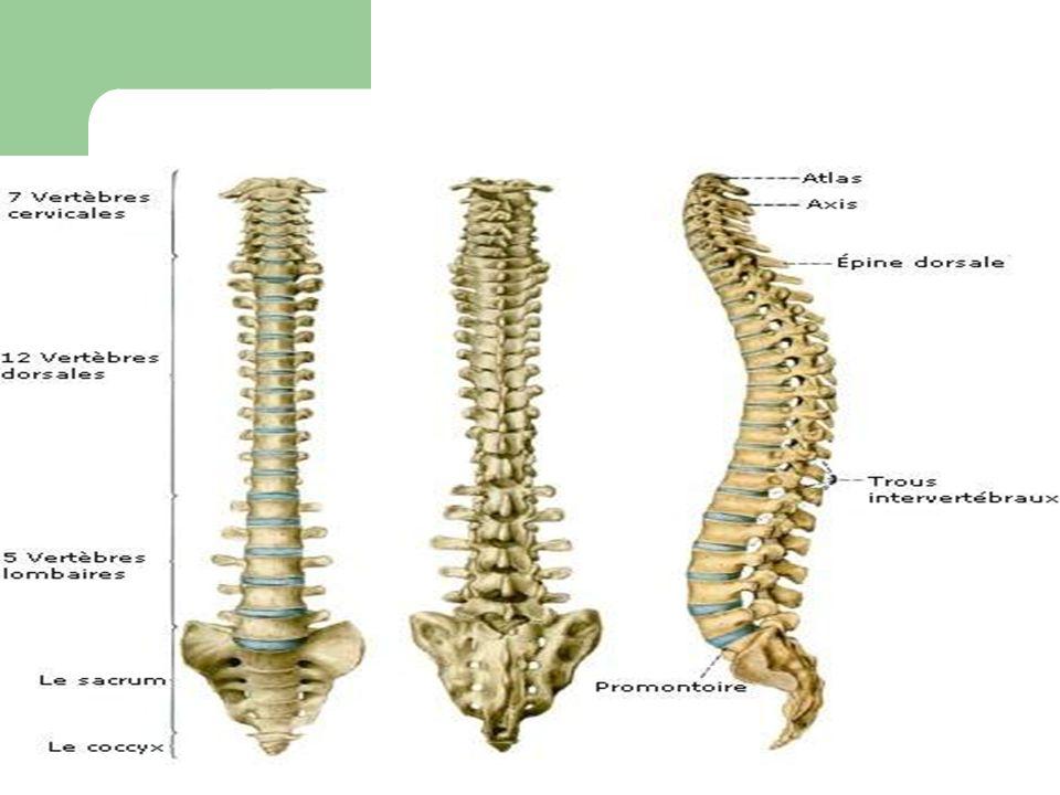 IRM: montre mal de pott: au niveau D3-D4