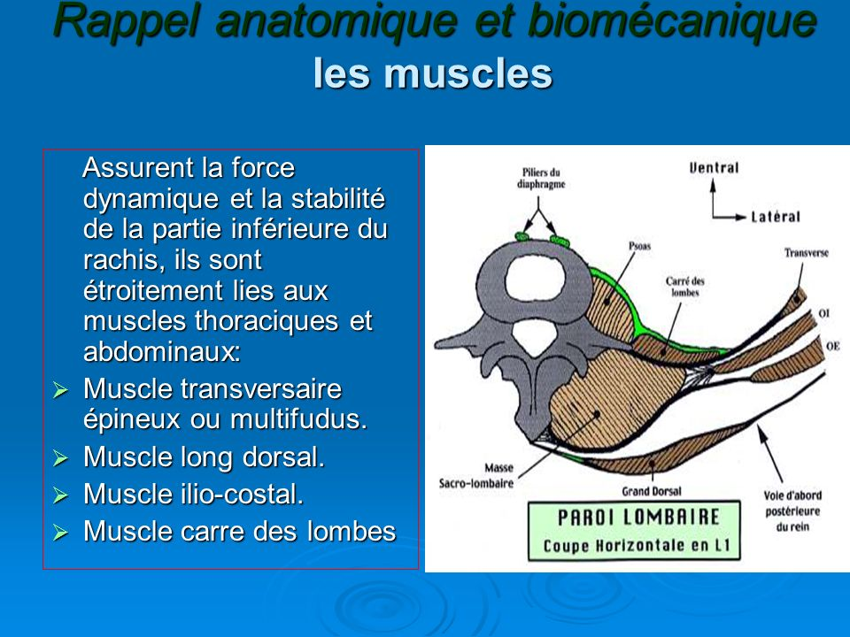 Rappel anatomique et biomécanique biomécanique Le rachis lombaire est compose dunités fonctionnelles qui agissent en synergie,chacune compose de 2vertebres adjacentes et dun segment mobile,qui est constitue du disque,des articulations postérieures et des ligaments.