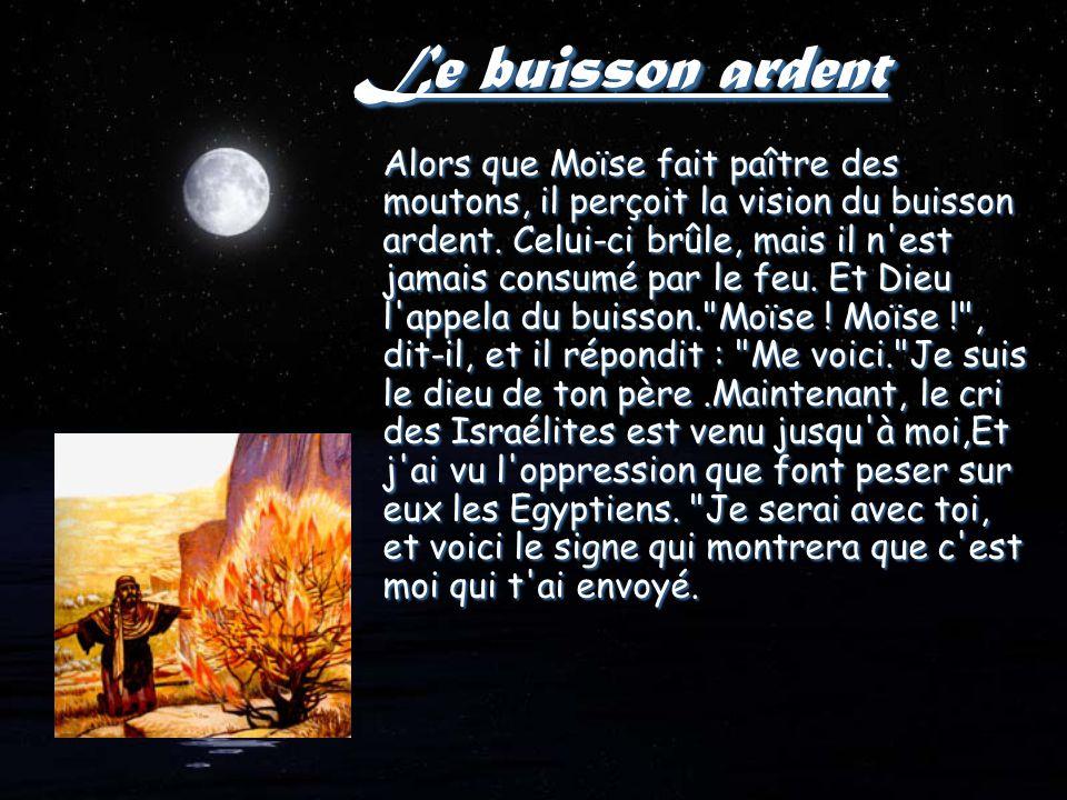 Le buisson ardent Alors que Moïse fait paître des moutons, il perçoit la vision du buisson ardent.