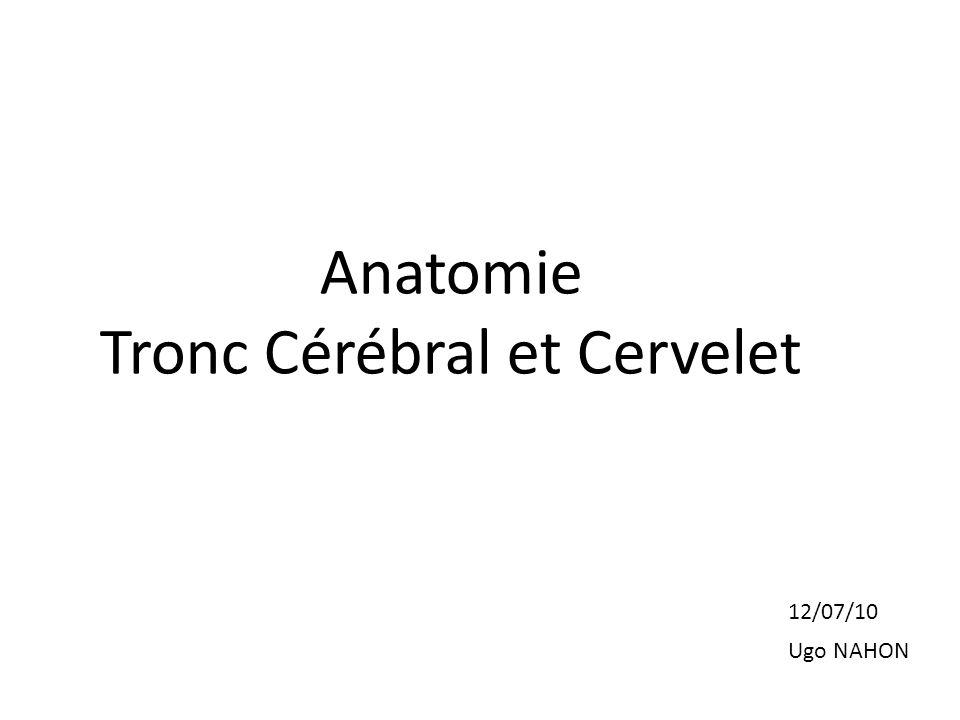 Anatomie Tronc Cérébral et Cervelet 12/07/10 Ugo NAHON