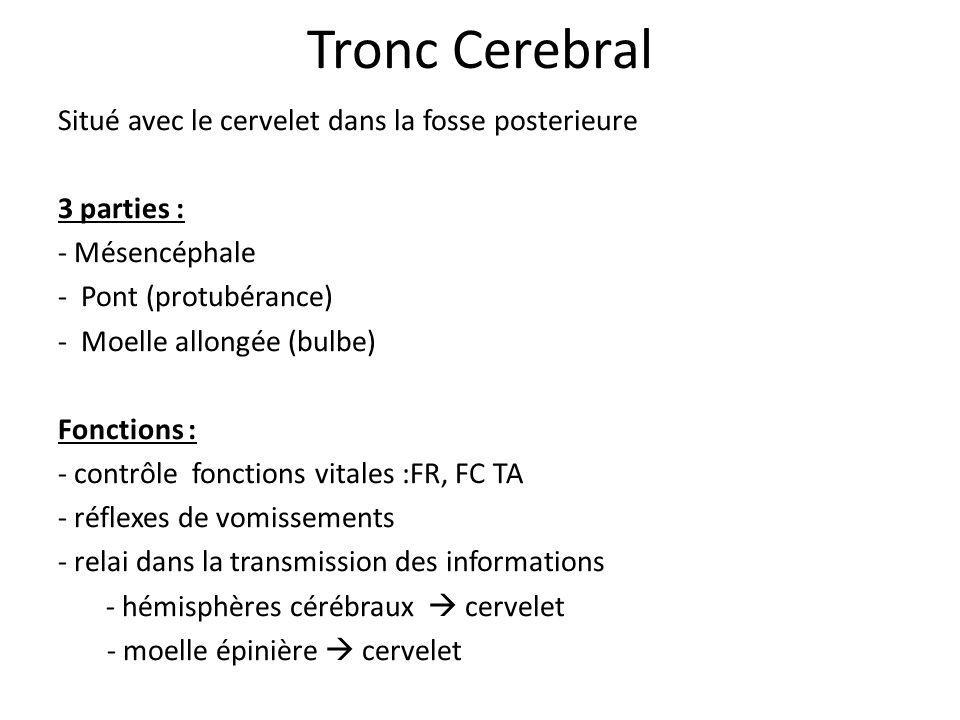 Tronc Cerebral Situé avec le cervelet dans la fosse posterieure 3 parties : - Mésencéphale - Pont (protubérance) - Moelle allongée (bulbe) Fonctions :