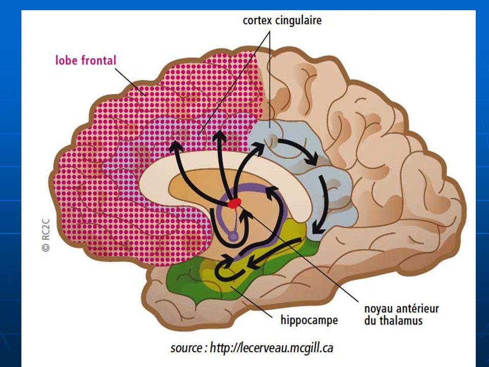 Fonctions Centre des émotions Centre des émotions centre de la mémoire : centre de la mémoire : -La mémoire immédiate (testée après une information sensorielle brève).