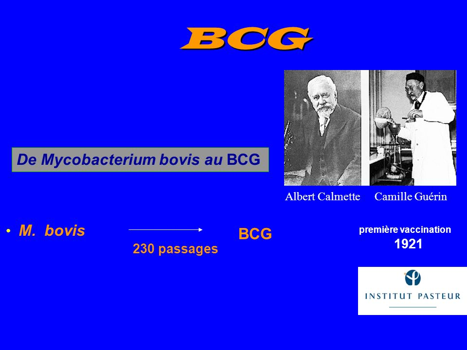 M. bovis 230 passages Calmette & Guérin 1921 BCG De Mycobacterium bovis au BCG première vaccination BCG Albert CalmetteCamille Guérin