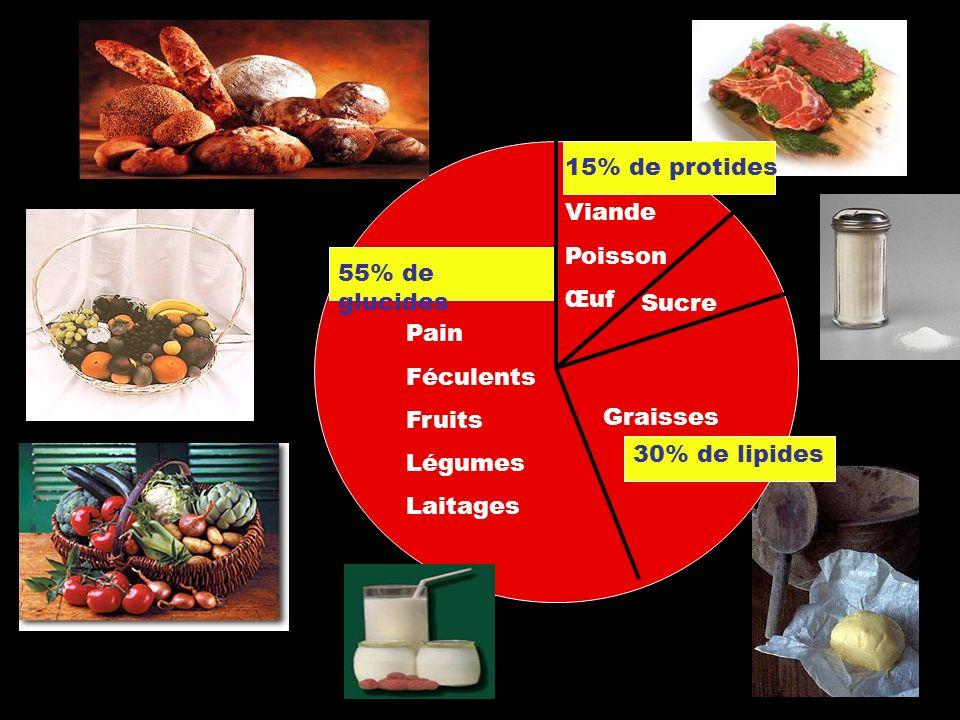 Graisses Viande Poisson Œuf Pain Féculents Fruits Légumes Laitages Sucre 55% de glucides 15% de protides 30% de lipides