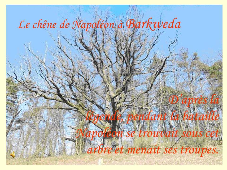 Le chêne de Napoléon à Barkweda Daprès la légende, pendant la bataille Napoléon se trouvait sous cet arbre et menait ses troupes.