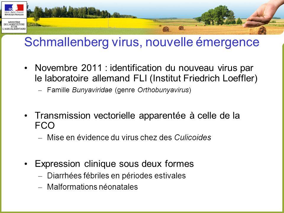 Schmallenberg virus, nouvelle émergence Novembre 2011 : identification du nouveau virus par le laboratoire allemand FLI (Institut Friedrich Loeffler)