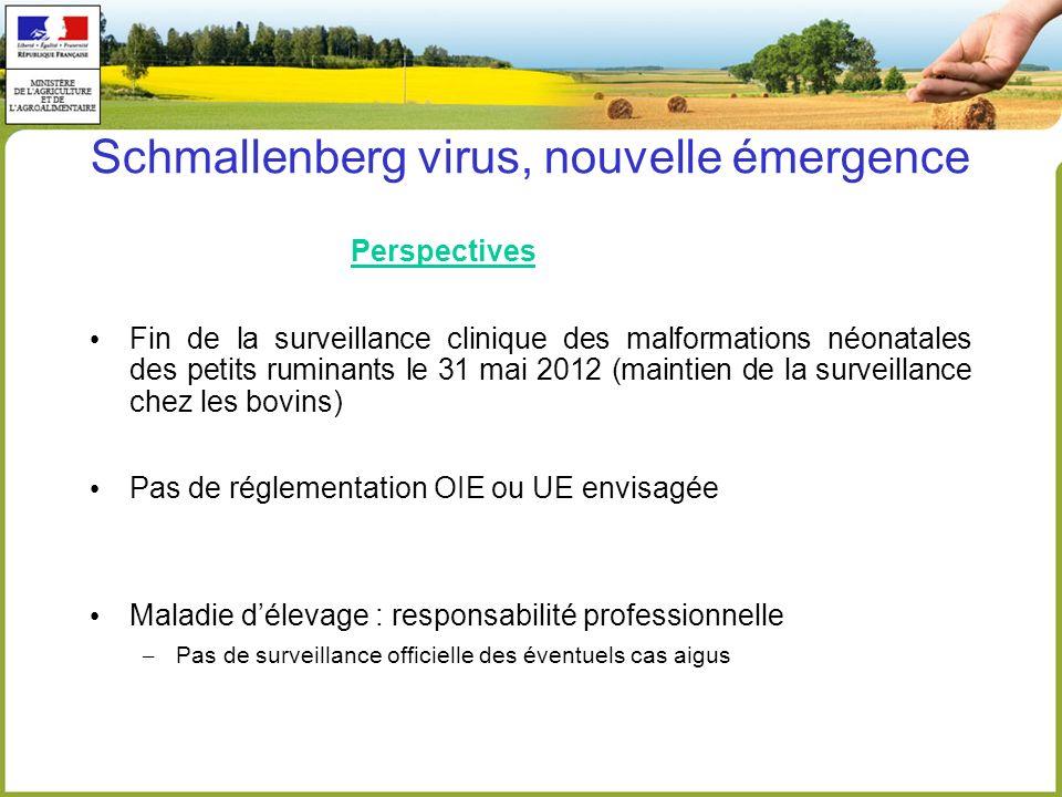 Schmallenberg virus, nouvelle émergence Perspectives Fin de la surveillance clinique des malformations néonatales des petits ruminants le 31 mai 2012