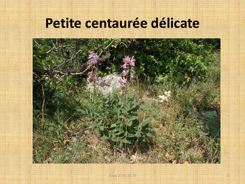 Petite centaurée délicate Pápa 2010.10.1922