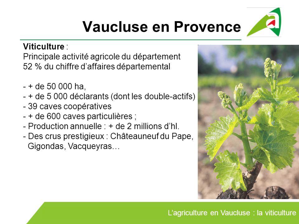 Vaucluse en Provence Lagriculture en Vaucluse : la viticulture Viticulture : Principale activité agricole du département 52 % du chiffre daffaires dép