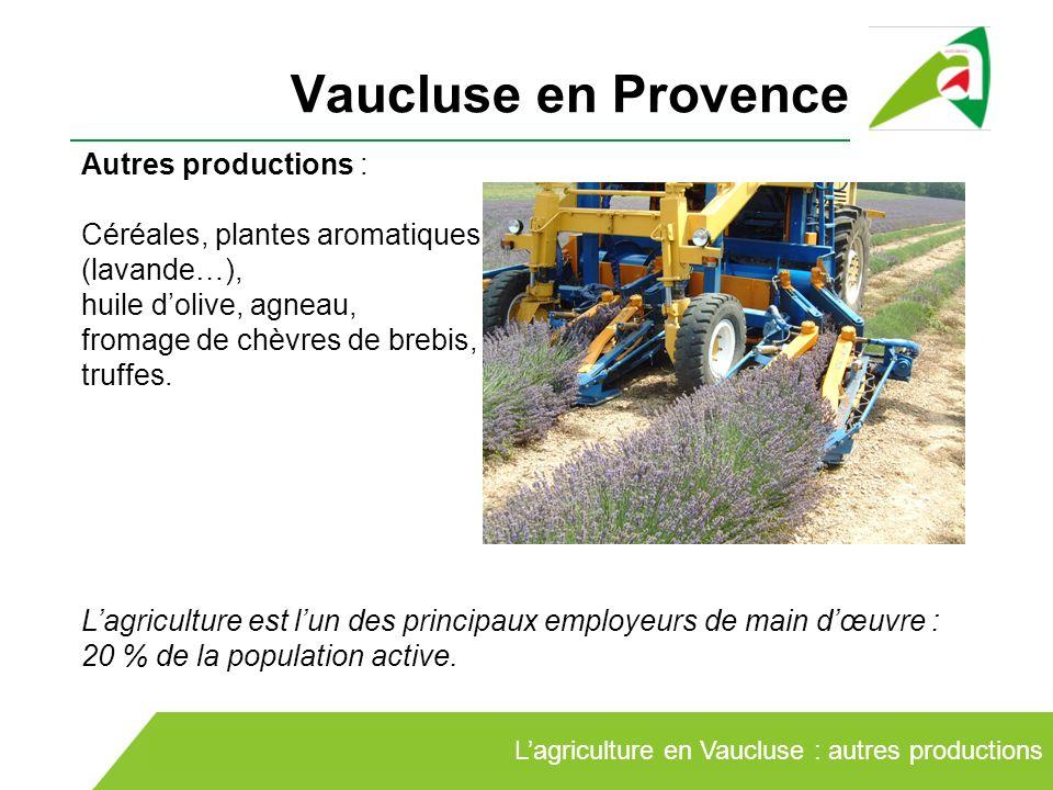 Vaucluse en Provence Lagriculture en Vaucluse : autres productions Autres productions : Céréales, plantes aromatiques (lavande…), huile dolive, agneau