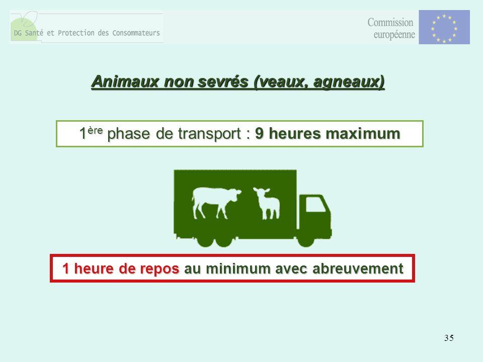 35 Animaux non sevrés (veaux, agneaux) 1 ère phase de transport : 9 heures maximum 1 heure de repos au minimum avec abreuvement