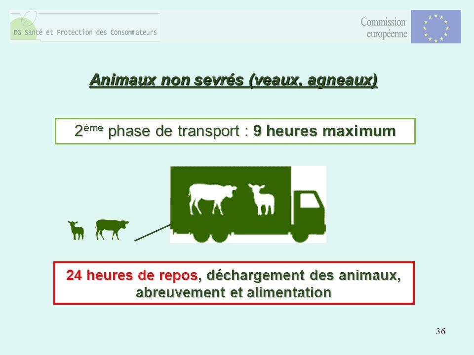 36 Animaux non sevrés (veaux, agneaux) 2 ème phase de transport : 9 heures maximum 24 heures de repos, déchargement des animaux, abreuvement et alimentation
