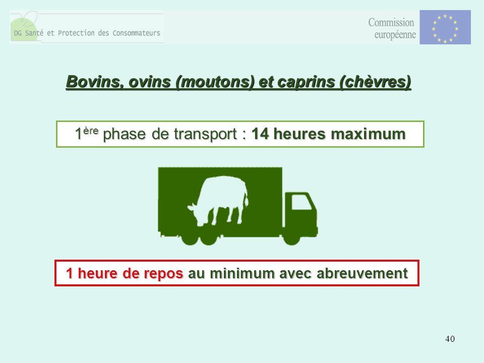 40 Bovins, ovins (moutons) et caprins (chèvres) 1 ère phase de transport : 14 heures maximum 1 heure de repos au minimum avec abreuvement
