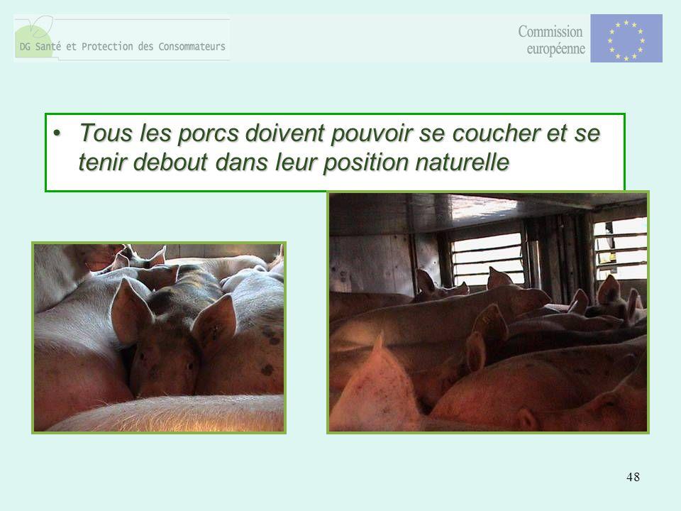 48 Tous les porcs doivent pouvoir se coucher et se tenir debout dans leur position naturelleTous les porcs doivent pouvoir se coucher et se tenir debout dans leur position naturelle