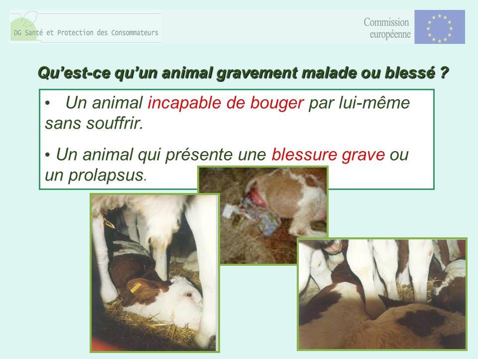8 Un animal incapable de bouger par lui-même sans souffrir. Un animal qui présente une blessure grave ou un prolapsus. Quest-ce quun animal gravement