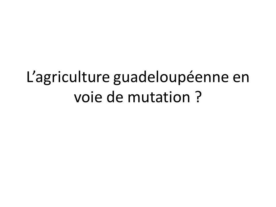 Lagriculture guadeloupéenne en voie de mutation
