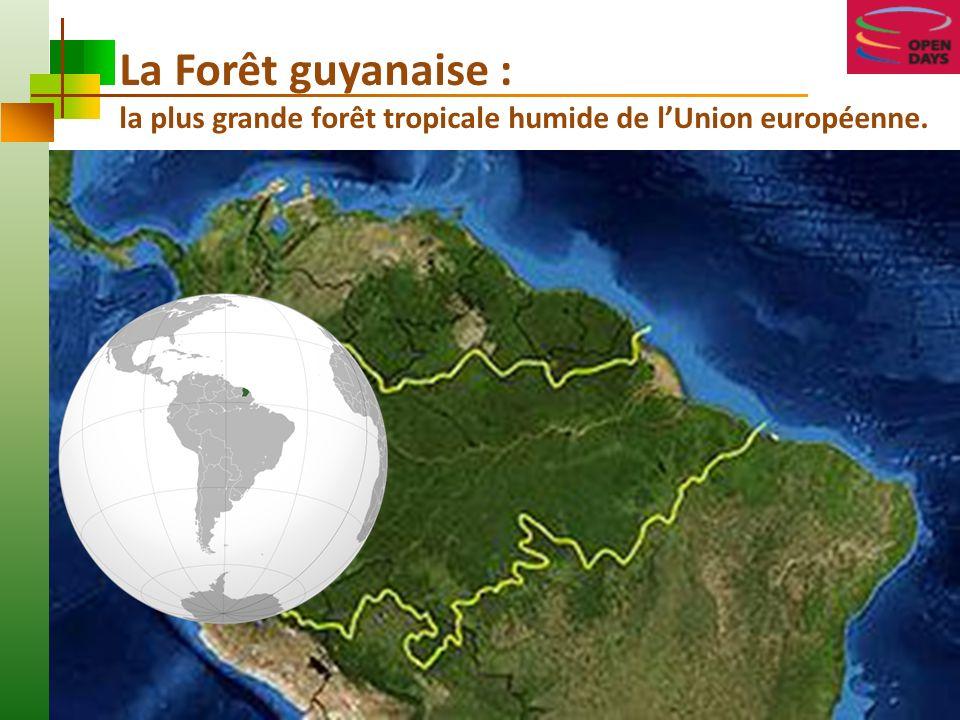 La Forêt guyanaise : la plus grande forêt tropicale humide de lUnion européenne.