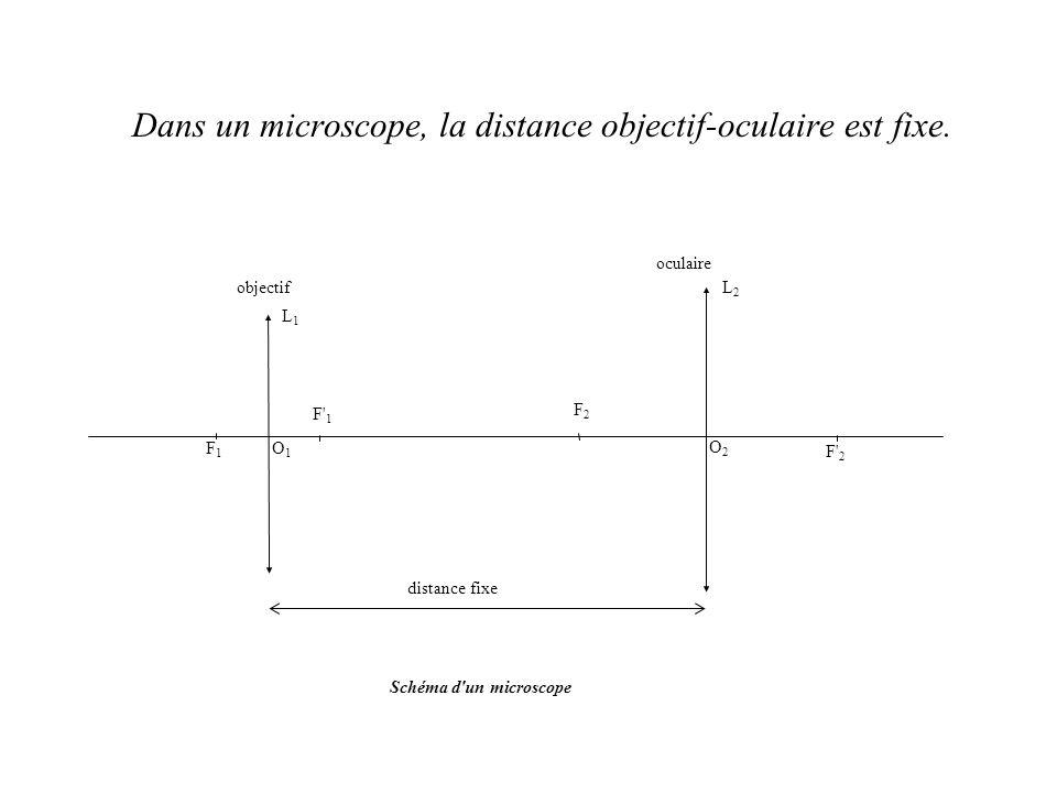 Dans un microscope, la distance objectif-oculaire est fixe. F' 2 O2O2 O1O1 F1F1 F' 1 L2L2 L1L1 F2F2 objectif oculaire Schéma d'un microscope distance