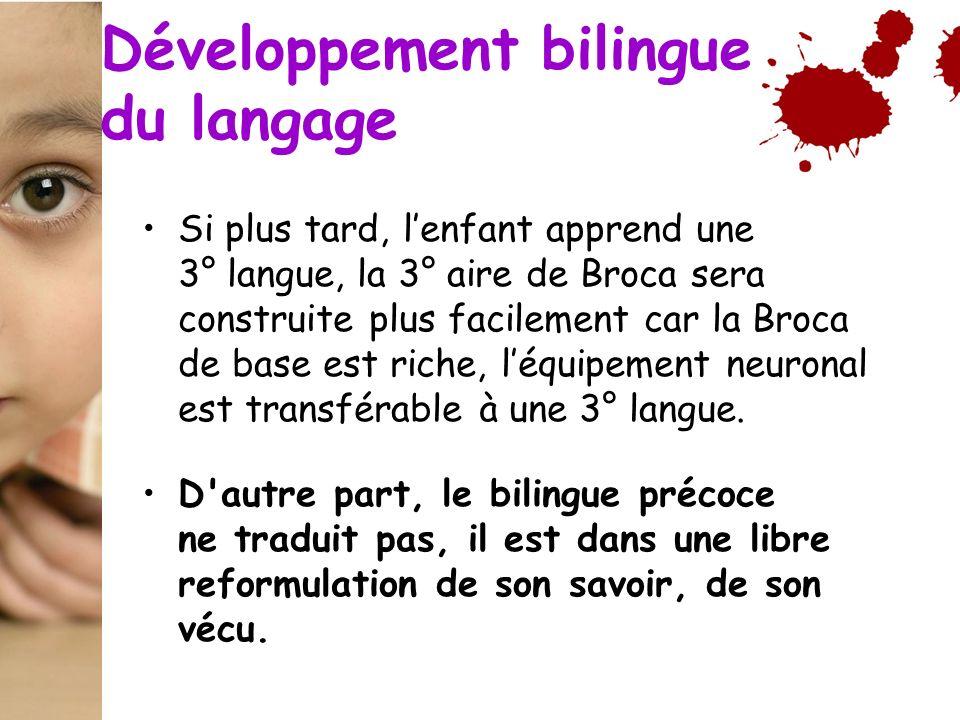 Si plus tard, lenfant apprend une 3° langue, la 3° aire de Broca sera construite plus facilement car la Broca de base est riche, léquipement neuronal