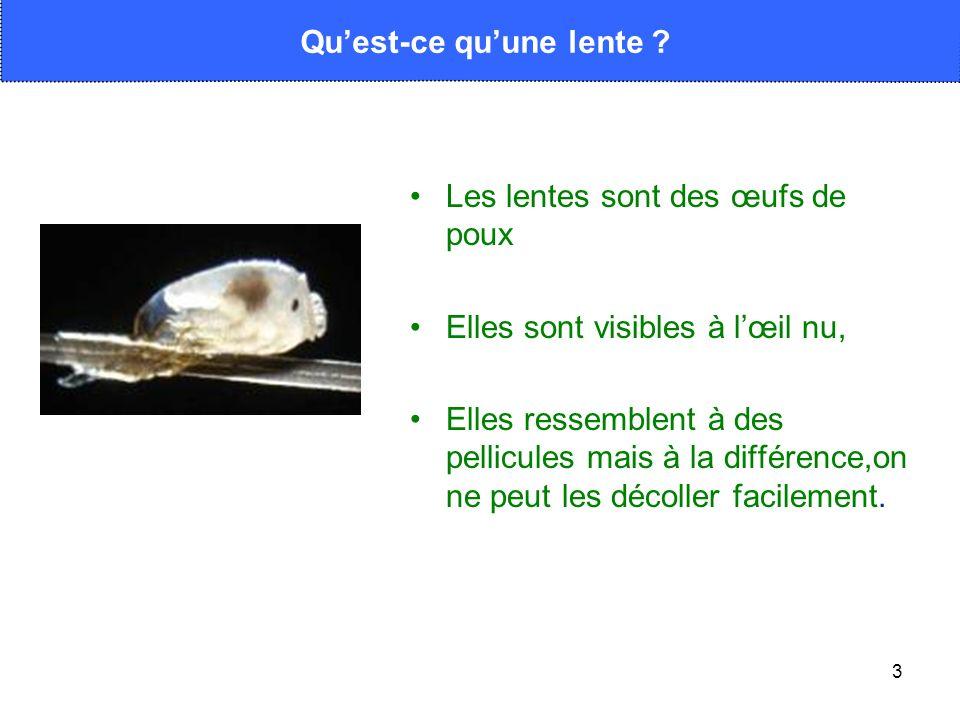 3 Les lentes sont des œufs de poux Elles sont visibles à lœil nu, Elles ressemblent à des pellicules mais à la différence,on ne peut les décoller faci