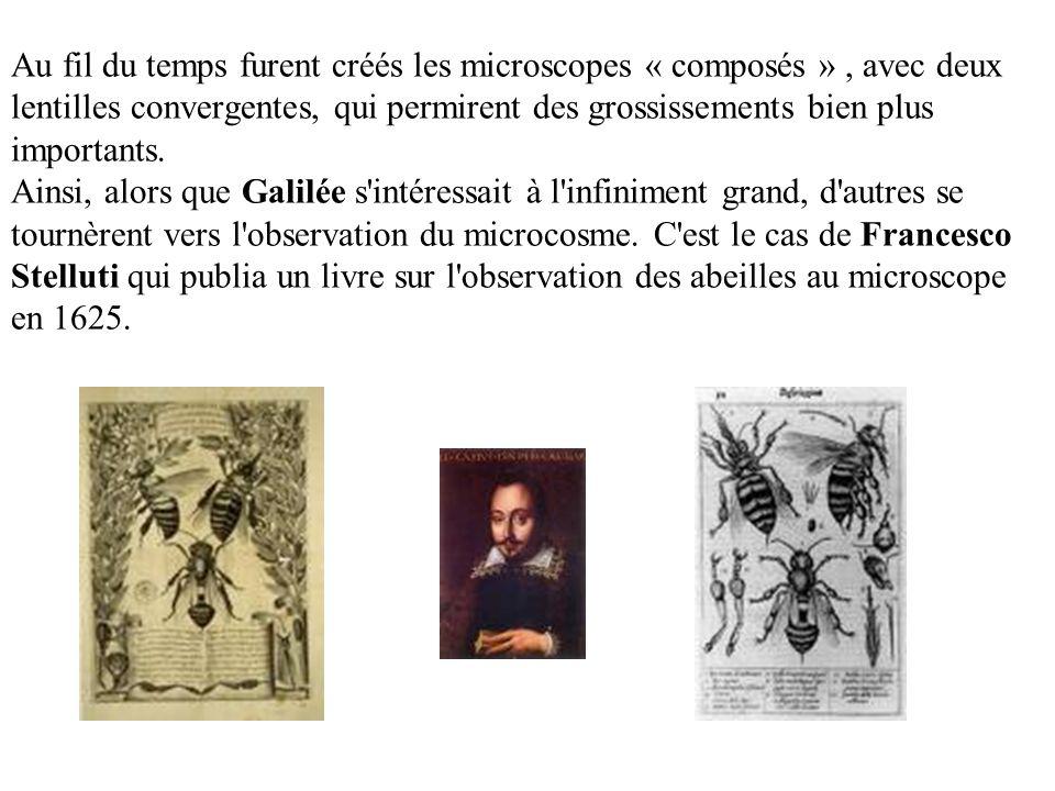 Grâce au microscope, Marcello Malpighi décrit les composants de nombreux organes, notamment les reins.