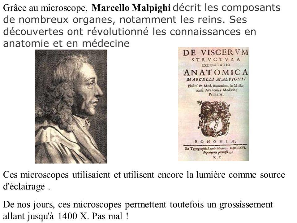 Grâce au microscope, Marcello Malpighi décrit les composants de nombreux organes, notamment les reins. Ses découvertes ont révolutionné les connaissan