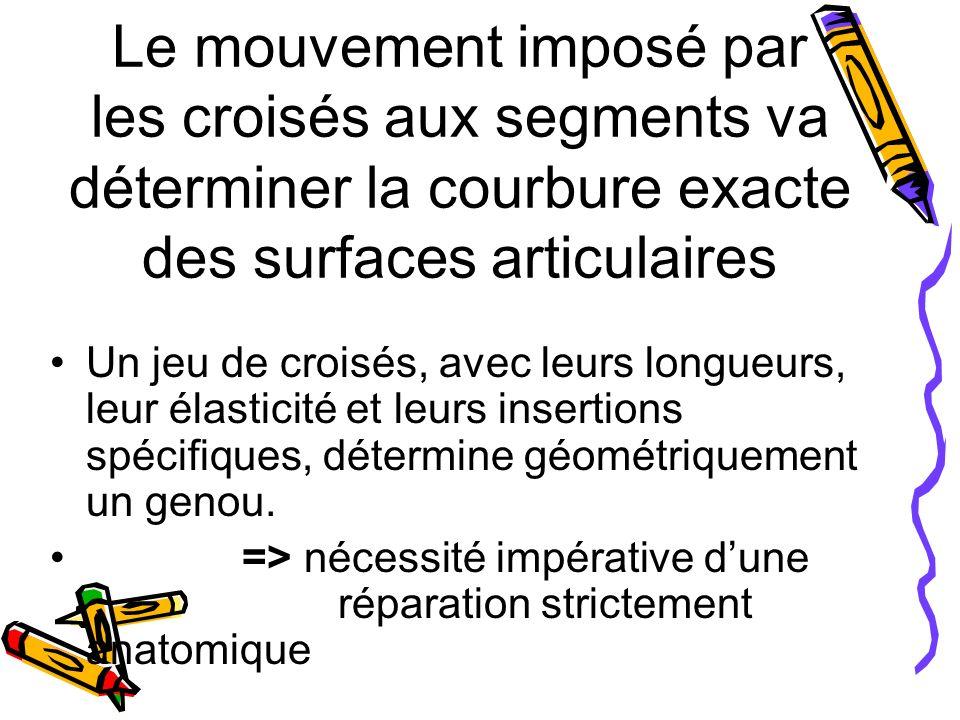 Le mouvement imposé par les croisés aux segments va déterminer la courbure exacte des surfaces articulaires Un jeu de croisés, avec leurs longueurs, leur élasticité et leurs insertions spécifiques, détermine géométriquement un genou.