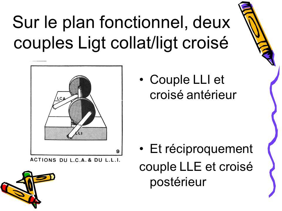 Sur le plan fonctionnel, deux couples Ligt collat/ligt croisé Couple LLI et croisé antérieur Et réciproquement couple LLE et croisé postérieur